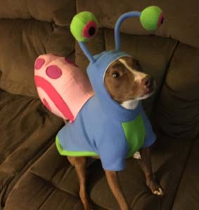 Gary The Snail Dog Costume