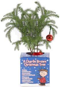 Small (10 12 Inces) Charlie Brown Christmas Tree